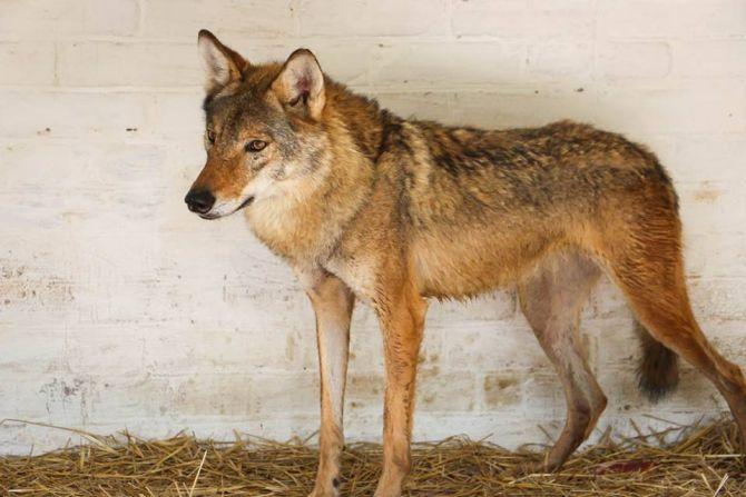 В Луцькому зоопарку з'явились нові тварини (Фото)